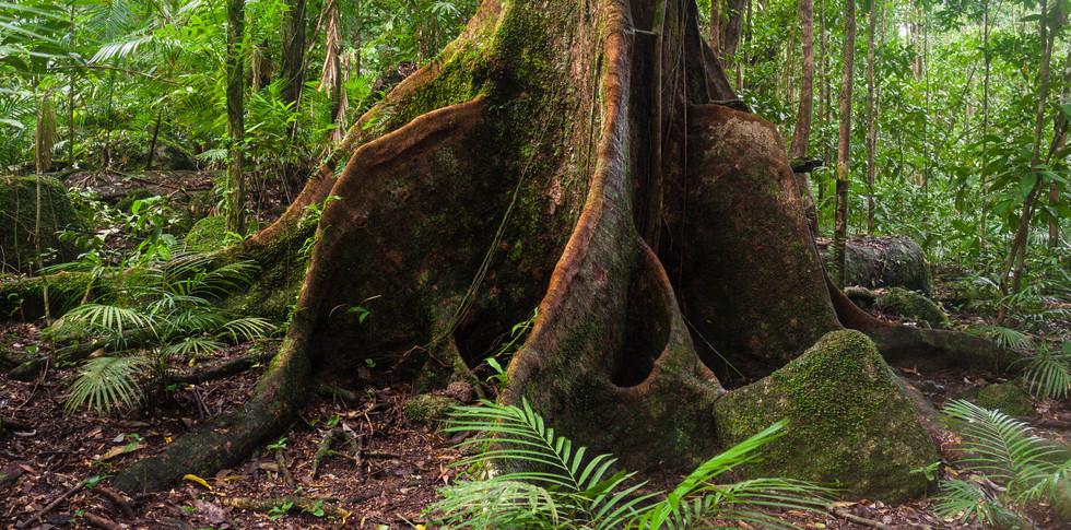 Mossman Gorge Queensland-5483.jpg