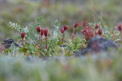New life blooms, Kamchatka