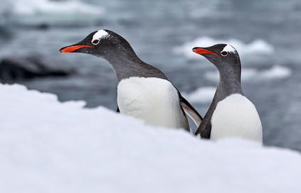 Fishermans return, Antarctica