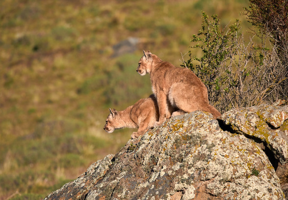 Lookout, Patagonia
