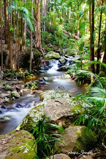 Tamborine Mountain Queensland-.jpg