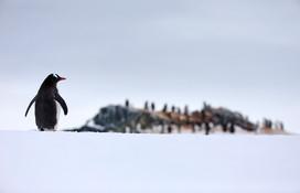Home, Antarctica