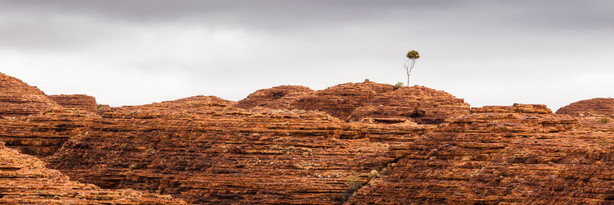 The Lonely Tree, Kings Canyon