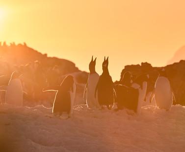 Sunset Call, Antarctica