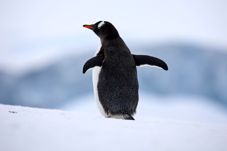 Stretch, Antarctica