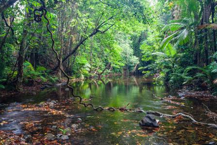 Daintree Rainforest Queensland-5180.jpg