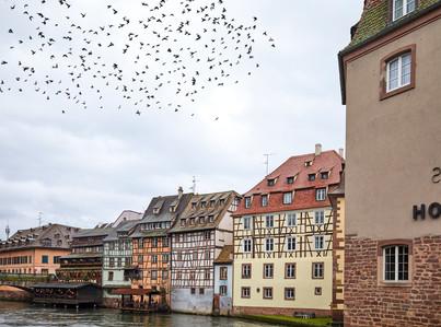 Taking flight - Strasbourg, France
