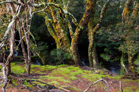 Enchanted Forest, Cradle Mountain
