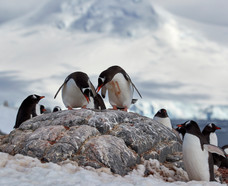 Rock King, Antarctica
