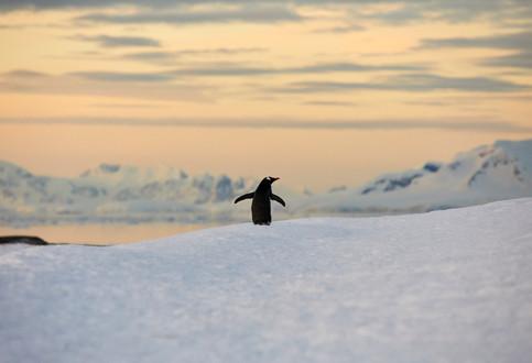 Soaking it in, Antarctica