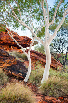 Kings Canyon Ghost Gums Northern Territo