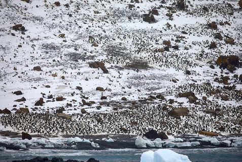 Penguin city, Antarctica