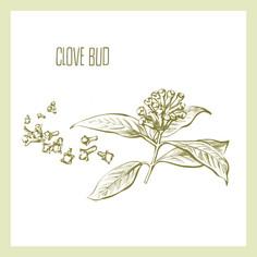 Clove Bud