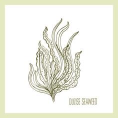 Duzise Seaweed