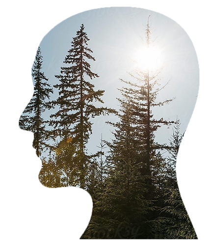 Profile Tree 2.png