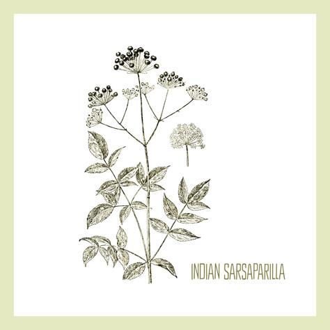 Indian Sarsaparilla
