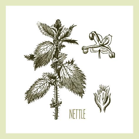 Nettle