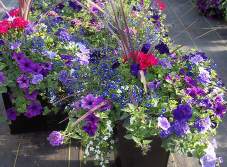 How to Create an Incredible Flower Container or Hanging Basket