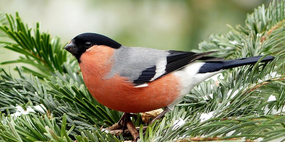 Garden For Birds This Winter