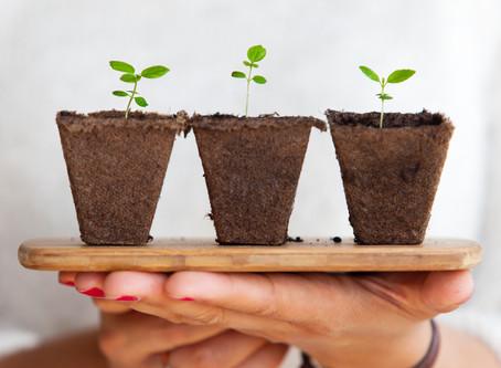 Starting Little Seedlings Indoors