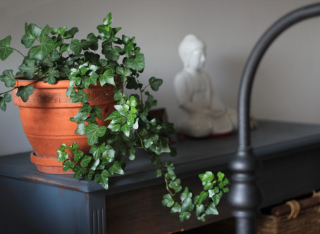 Waking up your indoor plants for Spring!