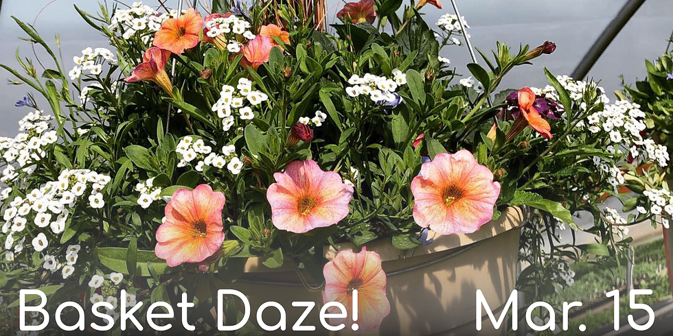 Basket Daze! (Mar. 15th)