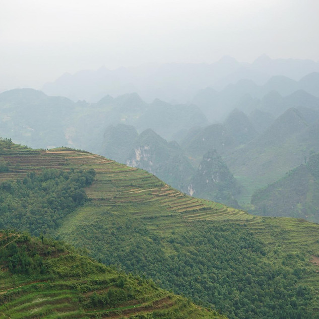 Reisterrassen auf dem Ha Giang Loop