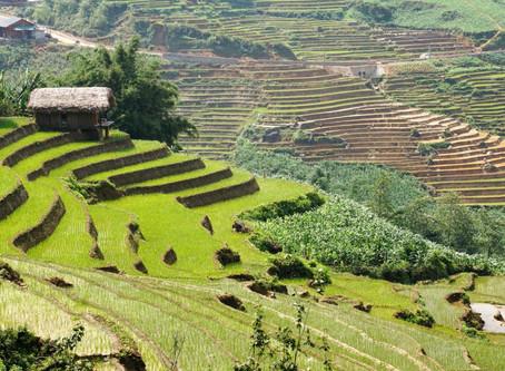 #23 Sa Pa und die Reisterrassen