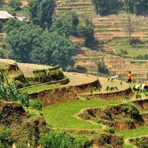 Arbeiter auf Reisfelder in Sapa