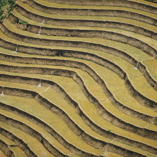 Reisfelder in Sapa