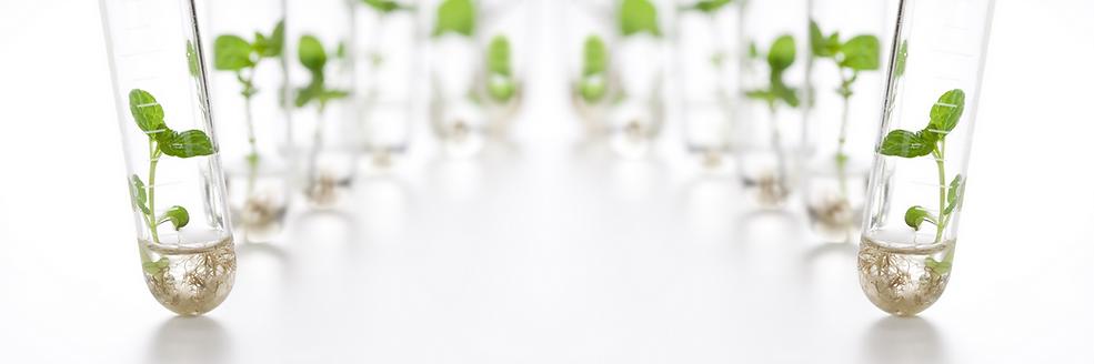 Biotratamientos, productos biotecnológicos para limpieza y desinfección