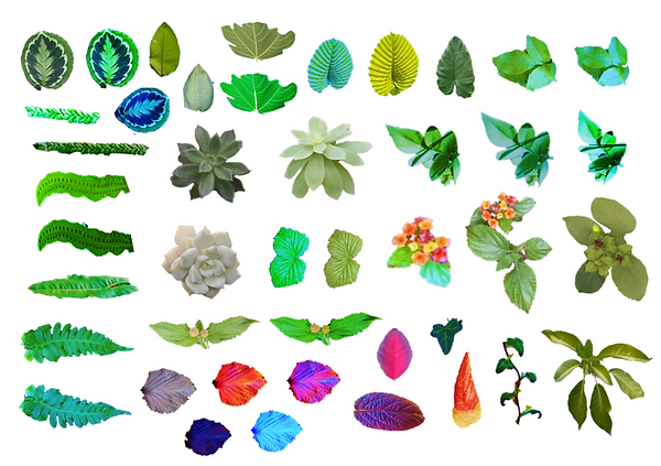 7 - leaves for illustrations.png