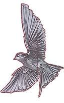 lisbon bird 1.jpg