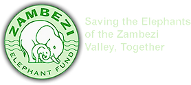 zef-logo-wide-05_edited.png