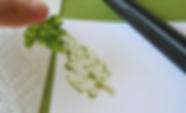 LeafIMpression.png