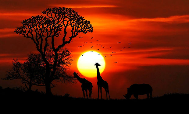 animals-birds-dawn-giraffe-417142.jpg