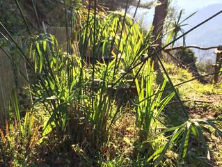 Stage de phytoépuration ou l'épuration des eaux par les plantes.