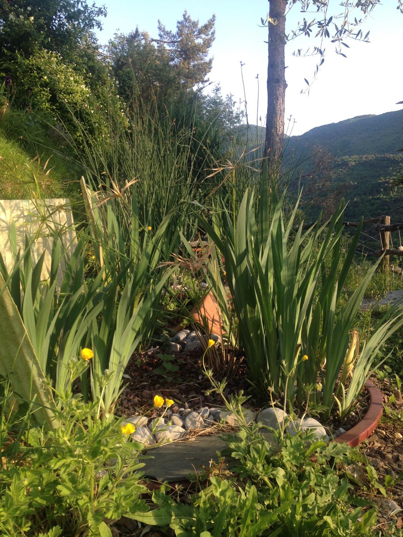 Au printemps, les iris