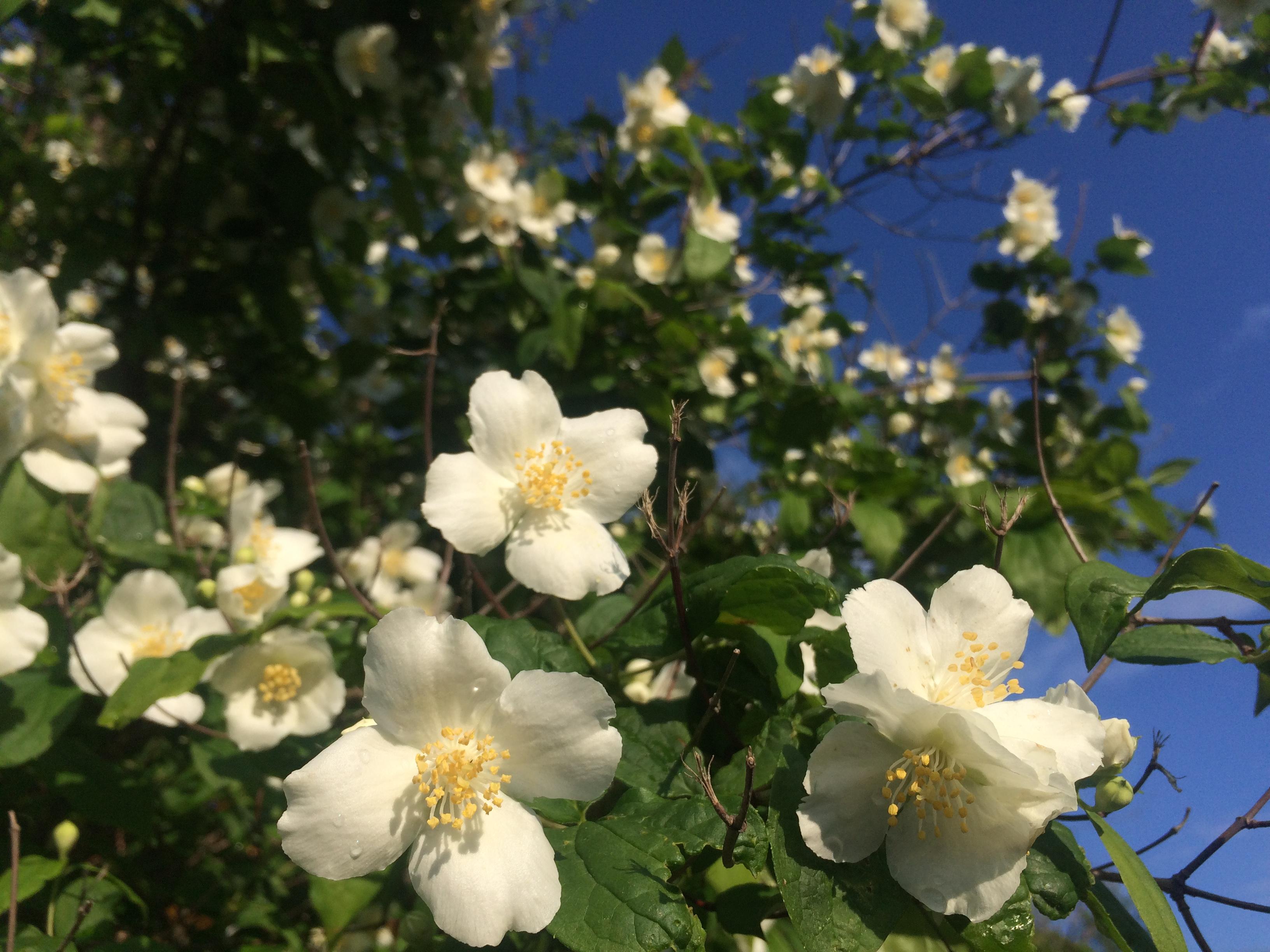 Flores del jardin en primavera