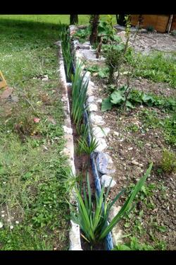 Bacs plantés autour de la maison