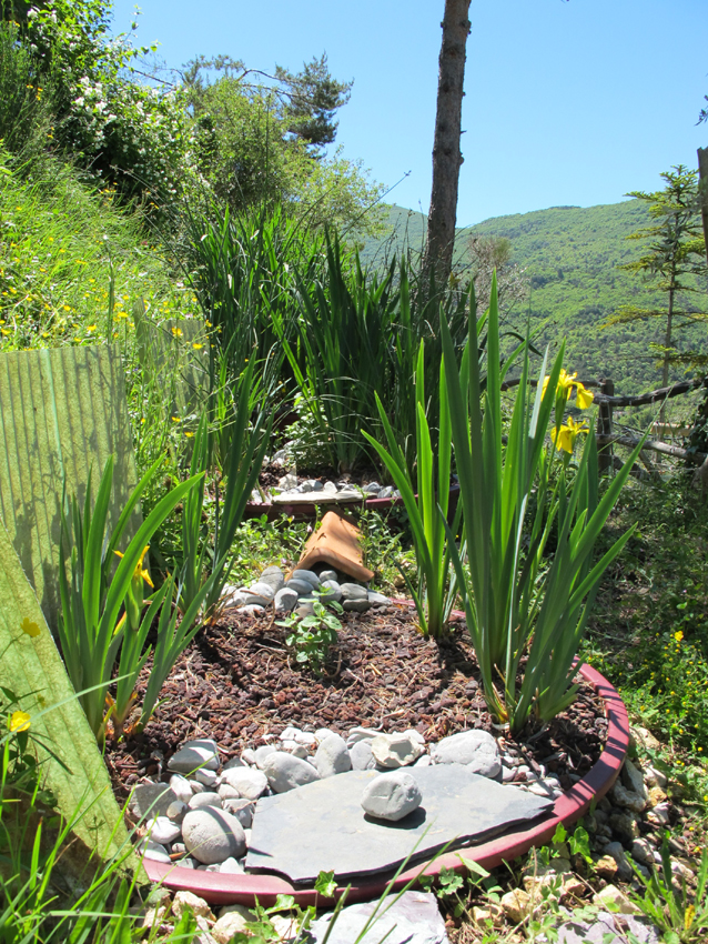 Purifying system using march plants