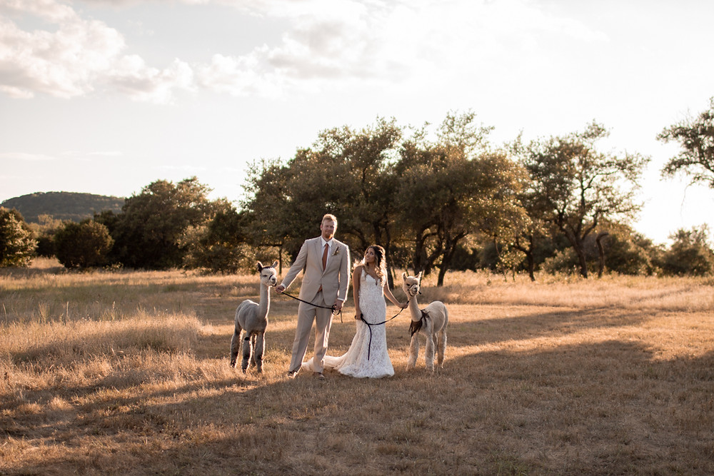 bride and groom walking alpacas through the texas hill country at sparrow creek ranch in graham texas