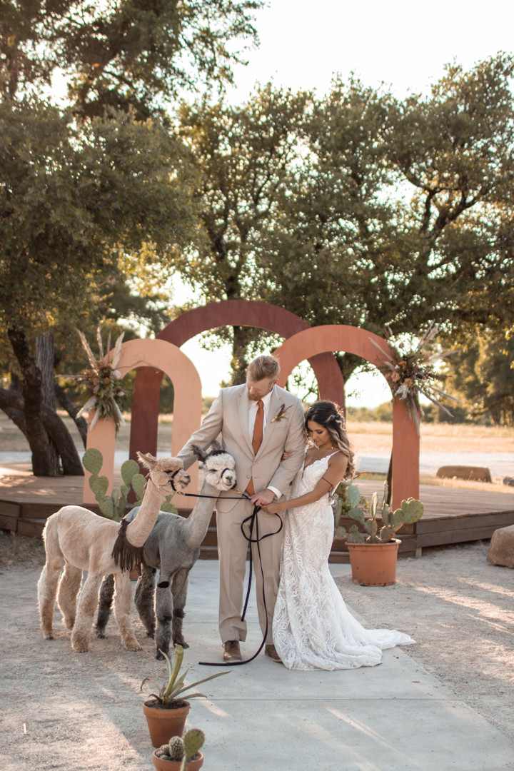 Bride and groom petting alpacas during their sparrow creek ranch boho styled wedding at sparrow creek ranch