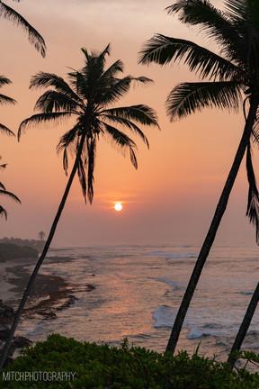 2019 - Sri Lanka - Palm tree hill