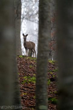 2020 - Baden-Württemberg - Deer