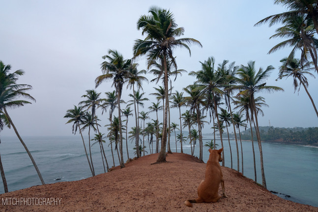 2019 - Sir Lanka - Palm tree hill