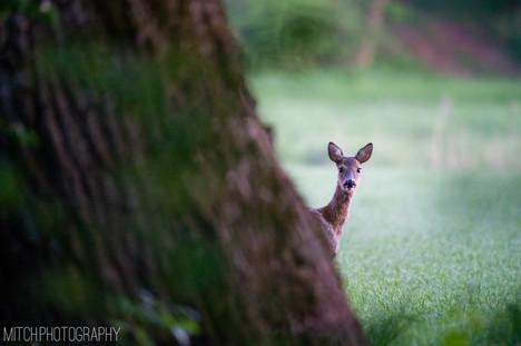 2020 - Bavaria - Deer