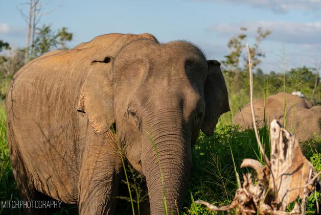 2019 - Sri Lanka - Elephant