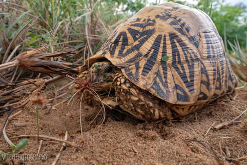 2019 - Sri Lanka - Turtle