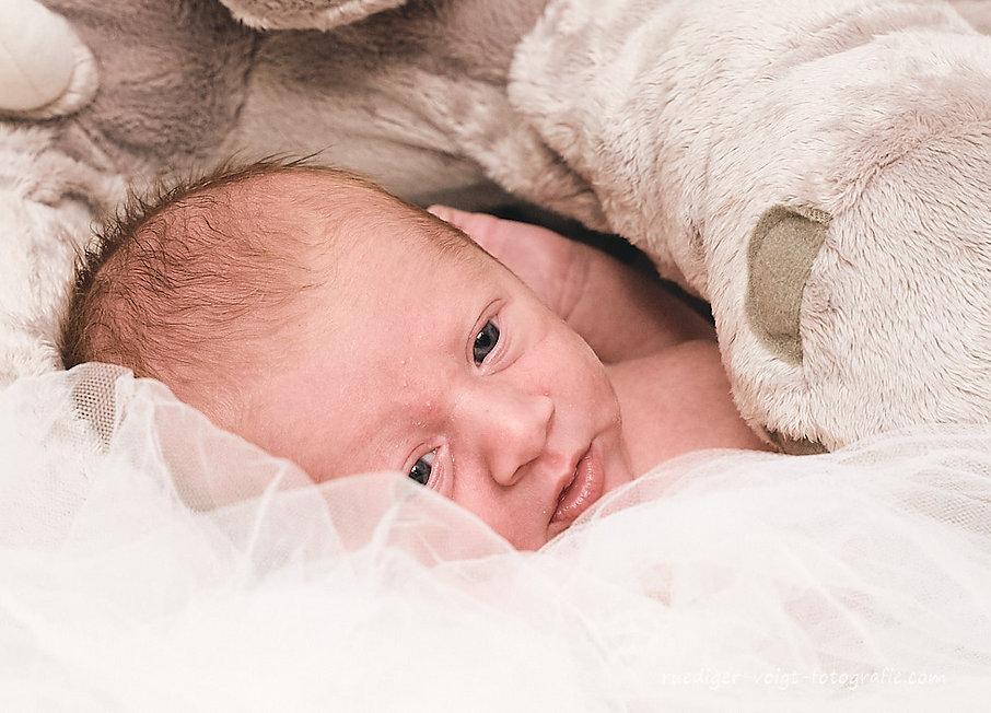 babyfotograf-dresden-babyfotos Rüdiger Voigt